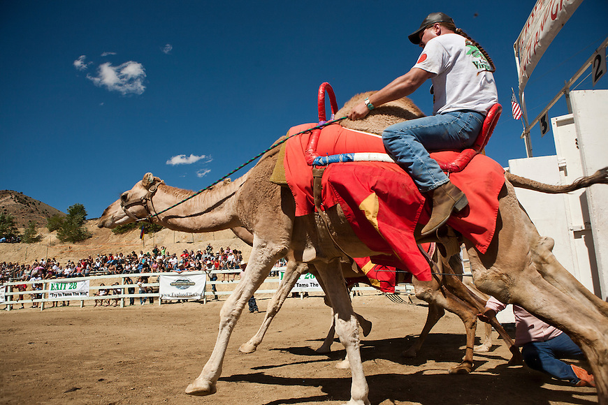 International Camel Races