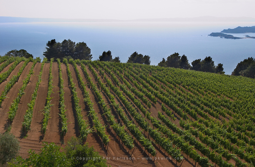 Greece Macedonia Wine & Vineyards stock photo samples