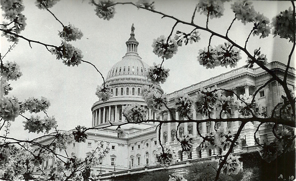 From the Archive: Spring in Washington Through the Years