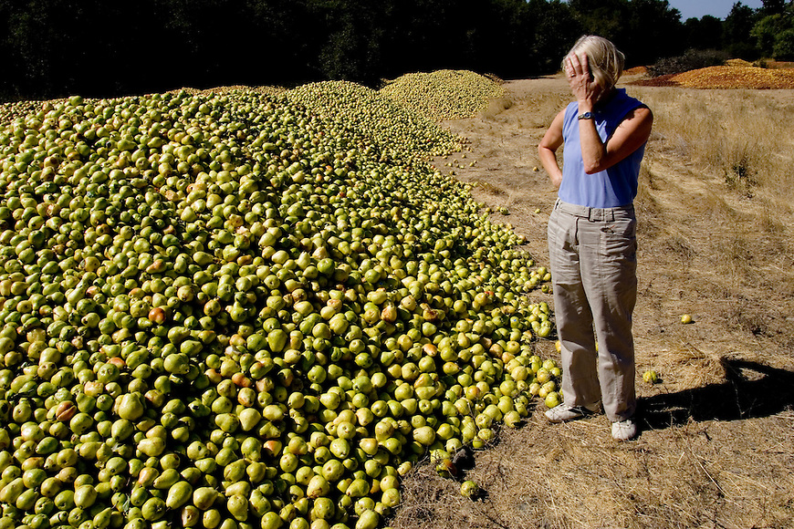 Lack of Migrant Labor Affects Pear Crop