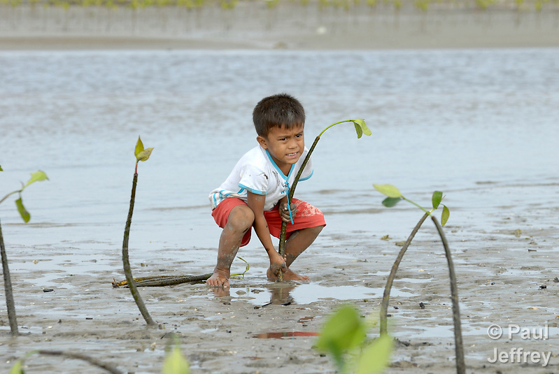 In this 2007 photo from the coastal village of Moawo, 5-year old Jefrin Zendrato plants mangrove seedlings, part of a project on the Indonesian island of Nias to improve habitat for sea life and provide some protection from future tsunamis. The project is sponsored by the Yakkum Emergency Unit (YEU), a member of the ACT Alliance. Parental consent obtained. (Paul Jeffrey)