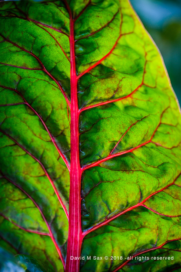 9.25.18 - Leafy G.... (© David M Sax 2018 - all rights reserved)
