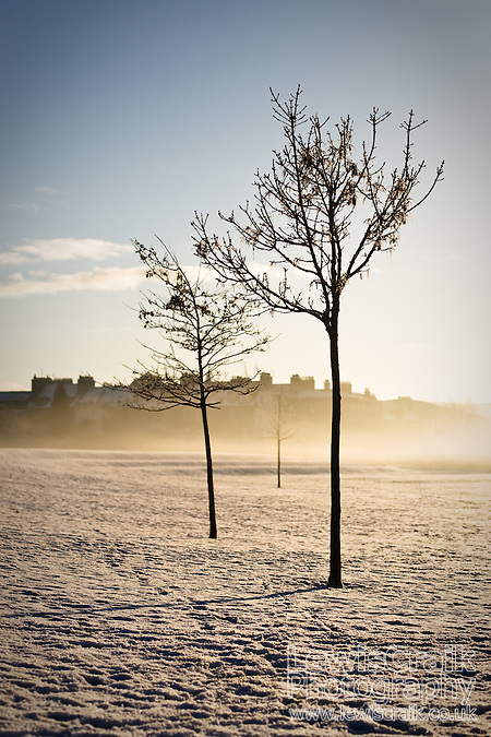 Trees on the snow covered North Inch Park in Perth, Scotland (Lewis Craik)