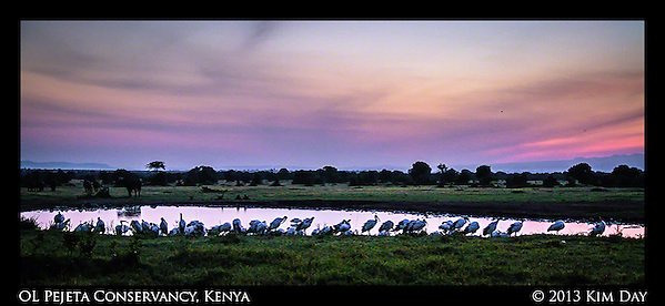 Birds at watering hole at sunrise OL Pejeta Conservancy - Kenya September 2013 (Kim Day)