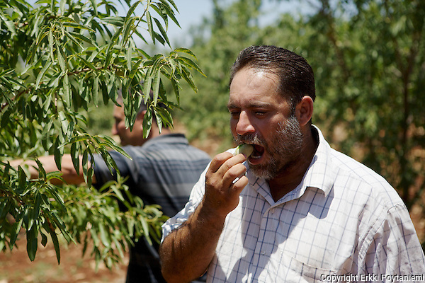 Adil Irshaid enjoying fresh almonds. (Erkki Poytaniemi)