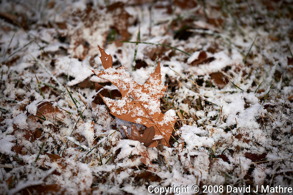 Fresh Snow on Leaf. Winter in New Jersey. Image taken with a Nikon D3 and 200 mm f/4 macro lens (ISO 200, f/5.6, 1/60 sec) (David J Mathre)