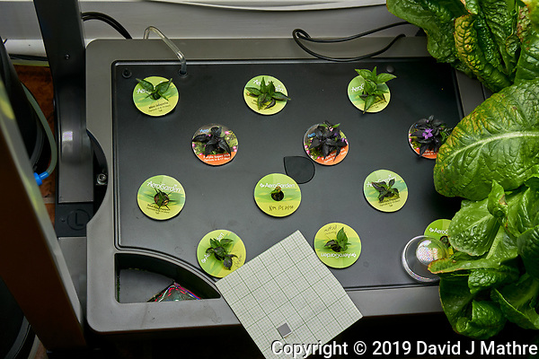 AeroGarden Farm 02 Left Tray at 63 days. L01-L03 Mini Jalapeno Peppers; L04-L06 Purple Super Hot Pepper; L07, L09 Red Fire Pepper; L08 NM Hatch; L10-L12 Szechuan Chile pepper. Image taken with a Leica TL-2 camera and 35 mm f/1.4 lens (ISO 200, 35 mm, f/8, 1/80 sec). (DAVID J MATHRE)