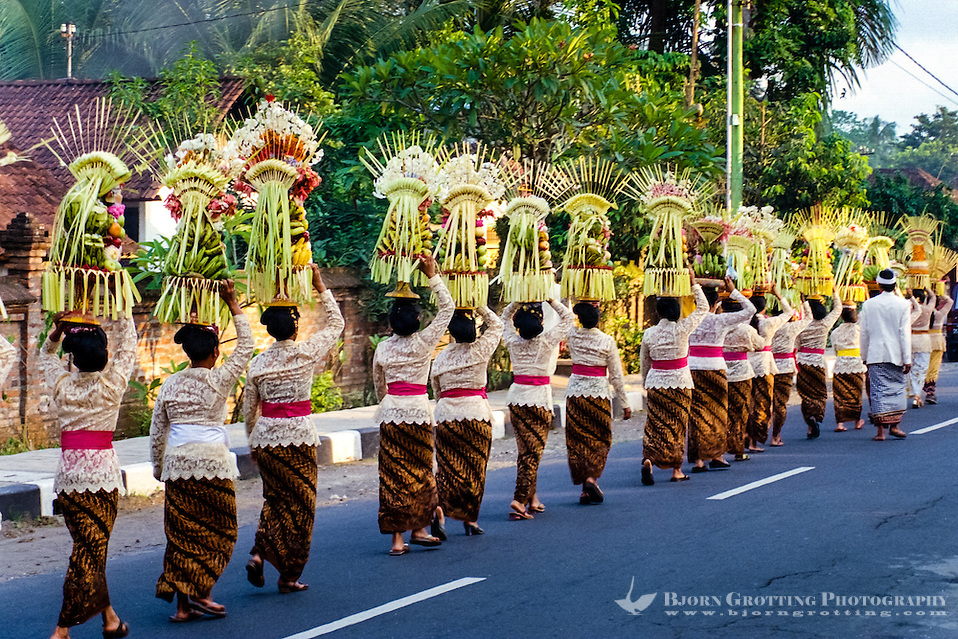 Bali, Badung, Sangeh. South of Sangeh, close to 100 women with offerings on their head. Everyone is dressed in traditional costumes. (Photo Bjorn Grotting)