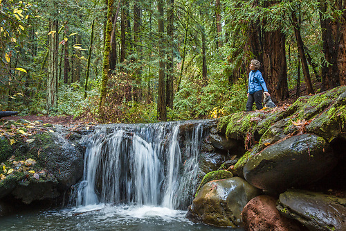 Mitzi Mishler and her dog, Molly, hike the Redwood Trail in Bothe-Napa Valley State Park near their home in Calistoga, CA (Clark James Mishler)