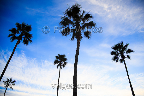MG 5370 Palm Trees High Resolution Photo New Newport Beach California Photos