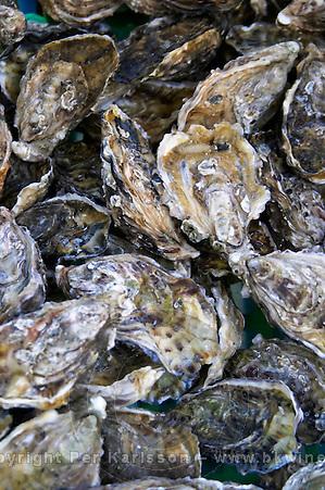 Oysters in Bordeaux