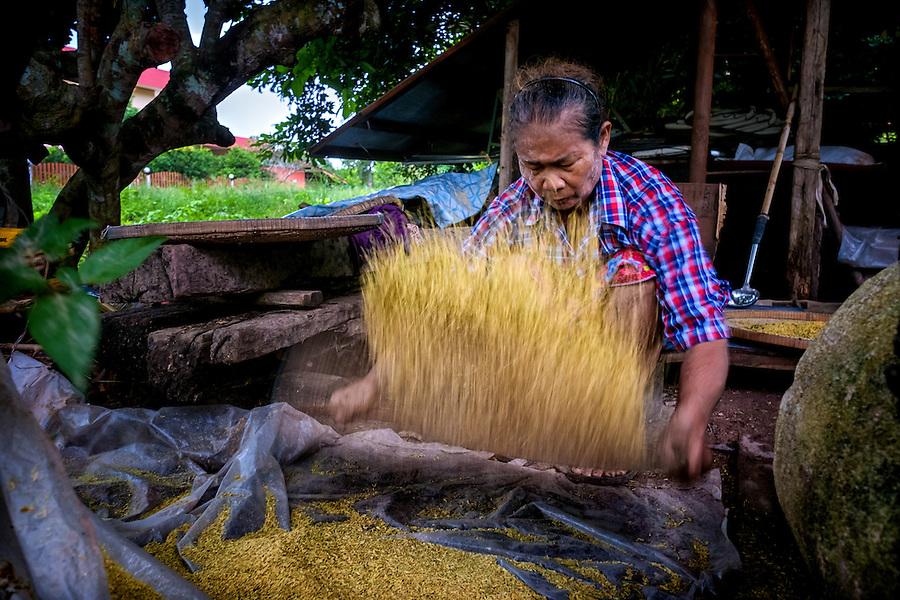 Hand Processing Green Rice in Nakhon Nayok, Thailand. PHOTO BY LEE CRAKER (Lee Craker, Lee Craker/Lee Craker)
