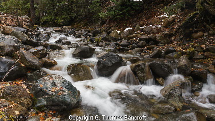 Leaves lined the sides of Beverly Creek as snowmelt and rain contributed to the torrent of water crashing over the rocks. (G. Thomas Bancroft)
