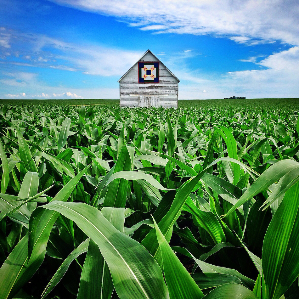 Thriving corn surrounds a quilt barn under the summer sky west of Perry along Highway 141 on Tuesday, June 24, 2014. (Christopher Gannon/The Register)