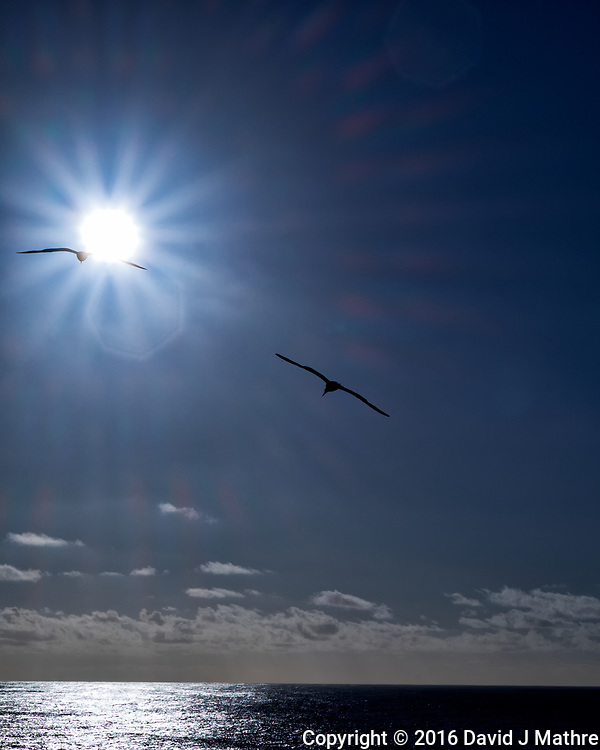 Pair of Brown Boobies flying into a Sun Burst. I guess they didn't read Icarus. From the deck of the MV World Odyssey while crossing the Pacific Ocean. Image taken with a Fuji X-T1 camera and 55-200 mm lens (ISO 200, 55 mm, f/22, 1/750 sec). (David J Mathre)