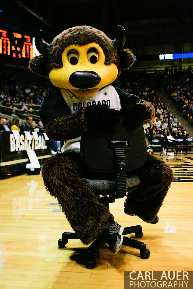 January 2nd, 2014:  The Colorado mascot, Chip the Buffalo spins on the tv cameraman's chair during a break in the first half of action in the NCAA Basketball game between the Oregon State Beavers and the University of Colorado Buffaloes at the Coors Events Center in Boulder, Colorado (Carl Auer/ZUMAPRESS.com)