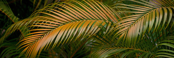Palm fronds from an abstract design (Douglas Page)