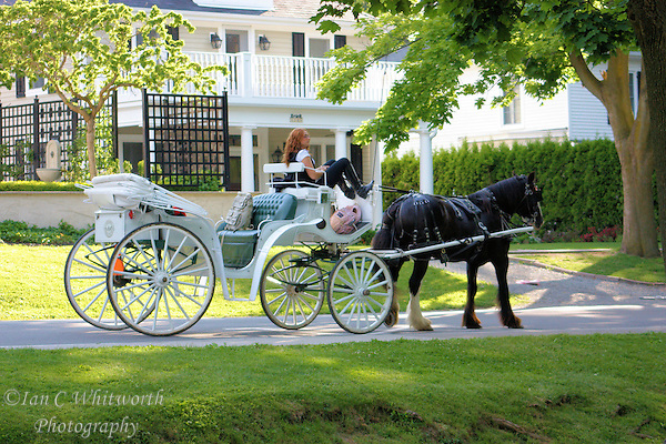 Horse & Buggy wait for a fair at Niagara on the Lake (Ian C Whitworth)