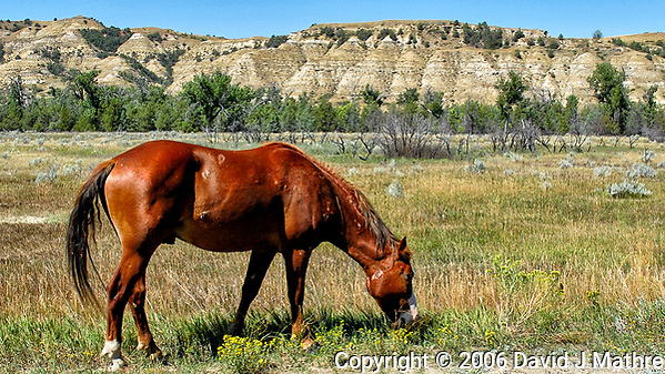 Lone Wild Horse at Theodore Roosevelt National Park. Image taken with a Nikon D200 camera and 18-70 mm kit lens (ISO 100, 18 mm, f/5.6, 1/400 sec). (David J Mathre)