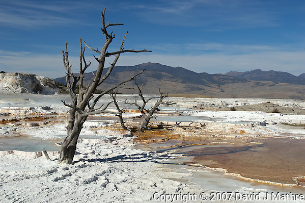 Dead Trees, Mammoth Springs. Yellowstone National Park. Image taken with a Nikon D2xs and 17-35 mm f/2.8 lens (ISO 100, 32 mm, f/11, 1/125 sec) (David J Mathre)