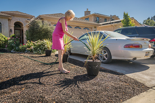"""We bought these plants over a month ago with the intension of getting them planted in the yard.  Then, they outgrew their pots so we put them into these larger ones.  Not sure when we'll get them in the ground.""  -Mortgage broker Kathy Cooper waters in front of her home on Myrtle Street in Calistoga (Clark James Mishler)"