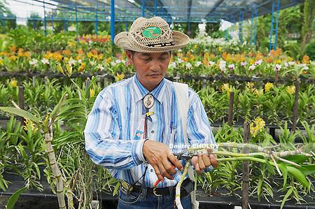 SAMUT SONGKRAM, THAILAND - MAY 22, 2009: Unidentified man works at the orchid farm in Samut Songkram, Thailand. (Dmitry Chulov)