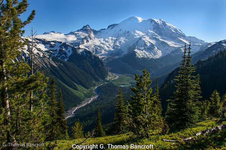 The Emmons Glacier flows down the east side of Mt Rainier and forms the headwaters of the White River. (G. Thomas Bancroft)