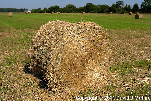 Freshly Mown Round Hay Bail. Summer Farm in New Jersey. Image taken with a Leica X1 camera (ISO 100, 24 mm, f/6.3, 1/800 sec). Out of the camera jpg image (no post processing). (David J Mathre)