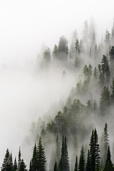 Cloud forest, Glacier National Park, Montana USA (© Russ Bishop/www.russbishop.com)
