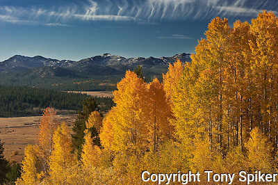 &quot;Hope Valley Fall Colors 1&quot; - Aspen Tress at the peak of the fall season overlooking Hope Valley (Tony Spiker)