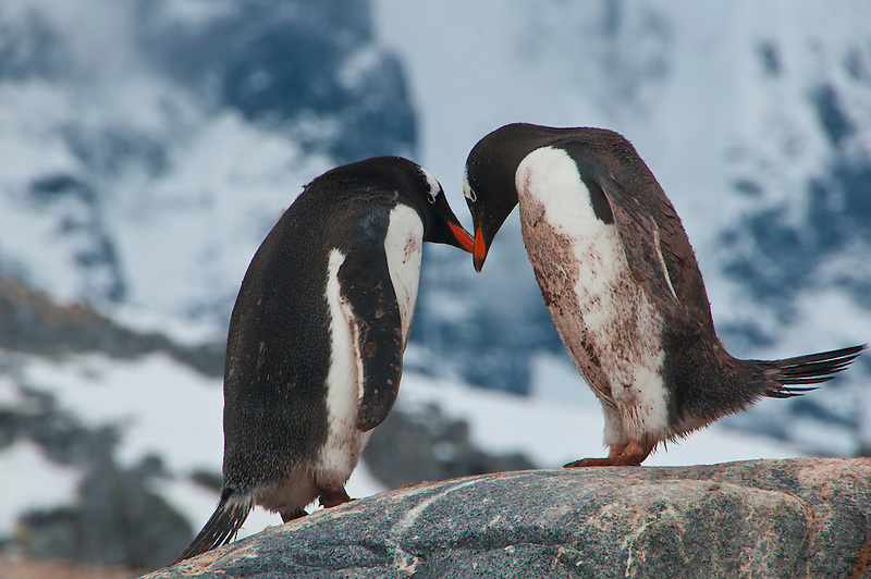 Antarctica and South Shetlands photos (Michael Runkel)