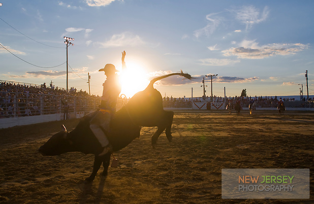 Brahama Bull Riding, Cowtown Rodeo, Salem County, New Jersey (Steve Greer)