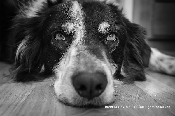 5.6.17 - The Eyes Have It... (© David M Sax 2017 - all rights reserved)