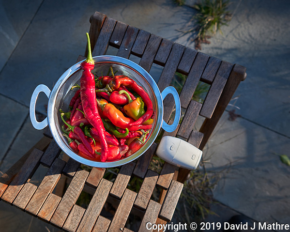 Hot Peppers grown on my Patio. Image taken with a Leica CL camera and 23 mm f/2 lens (ISO 100, 23 mm, f/3.5, 1/250 sec). (DAVID J MATHRE)