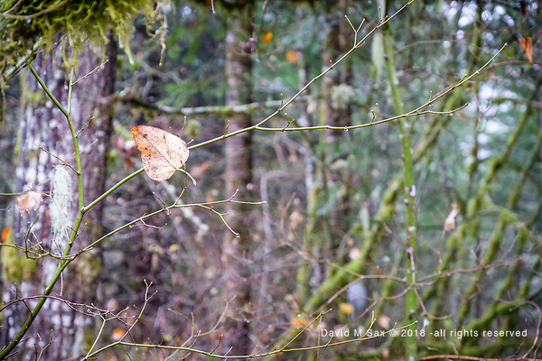 11.23.18 - Suspended... (©David M Sax - all rights reserved)