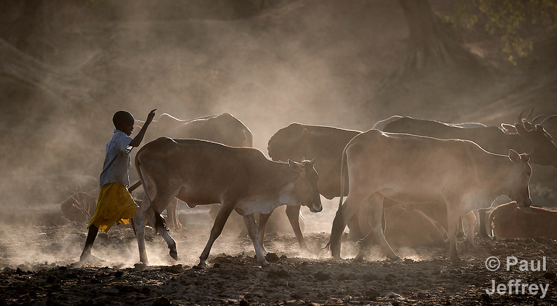 A boy cares for cattle in Gidel, a village in the Nuba Mountains of Sudan. The area is controlled by the Sudan People's Liberation Movement-North, and frequently attacked by the military of Sudan. (Paul Jeffrey)