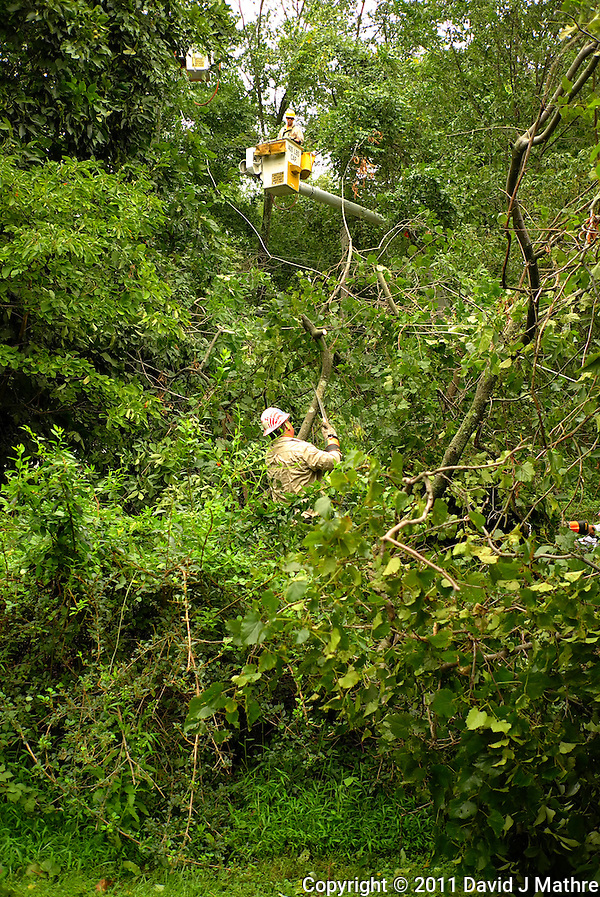 PSE&G Worker Working to Free the the Downed Power Line from Trees and Vines. Hurricane Irene. Image taken with a Leica X1 camera. (David J Mathre)