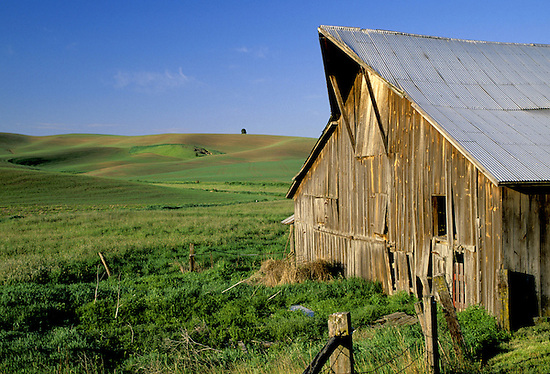 Barn and rolling wheat fields below blue sky, Palouse area, Washington. (Brad Mitchell/Brad Mitchell Photography)
