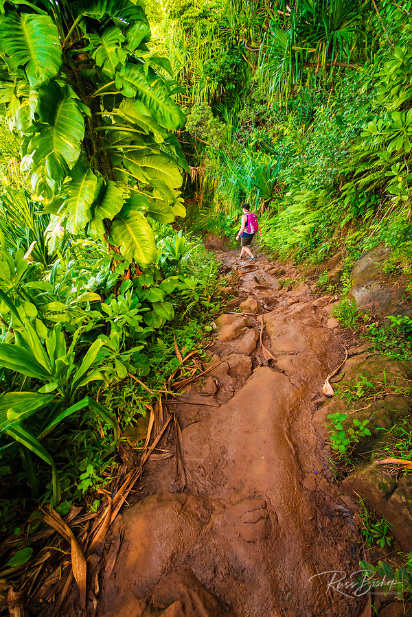 Lush vegetation along the Kalalau Trail, Na Pali Coast, Kauai, Hawaii USA (© Russ Bishop/www.russbishop.com)