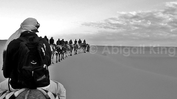 Black and white line of camels in the Sahara