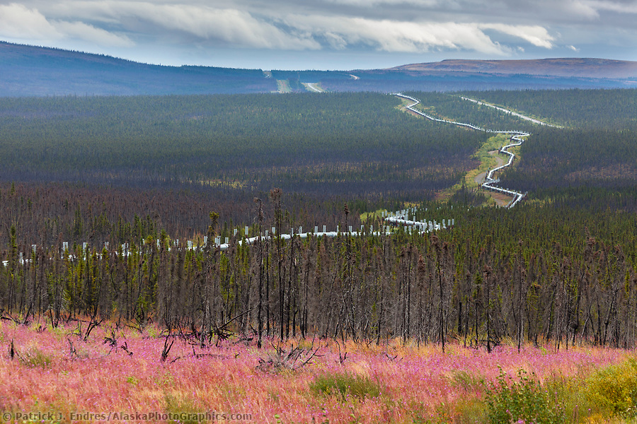 Bloomed out fireweed along the James Dalton Highway, commonly called the Haul Road, Trans Alaska oil pipeline, Alaska. (Patrick J Endres / AlaskaPhotoGraphics.com)