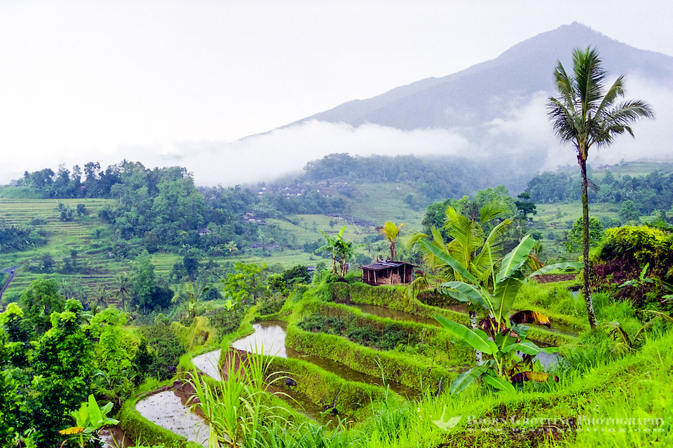 Bali, Tabanan, Jatiluwih. At 700m altitude, with beatiful terraced paddy fields. In the afternoon the sun finally appears on a rainy day, giving some more light to a very beautiful landscape. (Photo Bjorn Grotting)