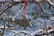 Vogelfutter, Vogel-Fettfutter, Fettfutter mit Sonnenblumenkernen und anderen Zutaten in weihnachtlichen Ausstechformen (Frank Hecker)