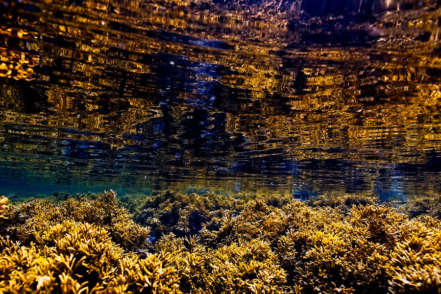 Variety of seaweed, urchins, a jelly fish and light captured at Fanks, Isle of Skye Photographer: Gill Williams Post Production: Geraint Ashton Jones https://www.belowtheskyeline.com (Below the Skye Line / © Gill Williams & © Geraint Ashton Jones)