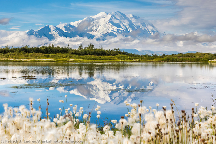 Alaska wildflower photos: Alaska cotton grass around a tundra pond with the mountain reflection of Denali, North America's tallest mountain. Denali National Park (Patrick J Endres / AlaskaPhotoGraphics.com)