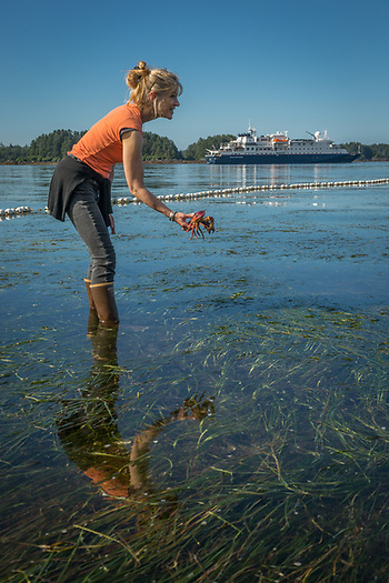 After freeing it from a fishing net entanglement, Mary returns a dungenes crab to the ocean during low tide in Sitka, Alaska (Clark James Mishler)