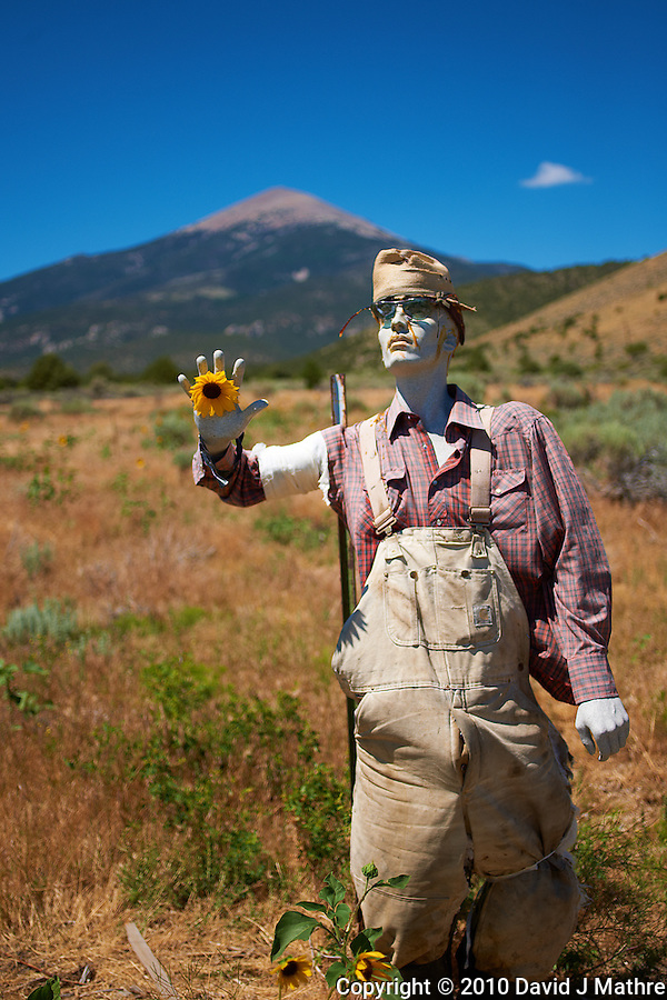 Zombie Sunflower Farmer. Image taken with a Nikon D3x and 45 mm f/2.8 PC-E lens (ISO 100, 45 mm, f/2.8, 1/2000 sec) (David J Mathre)