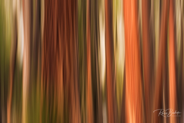 Forest abstract, Yosemite Valley, Yosemite National Park, California USA (© Russ Bishop/www.russbishop.com)