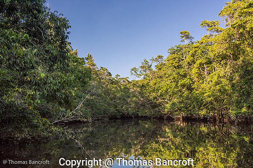 Mangroves line Barratt Creek. (G. Thomas Bancroft)