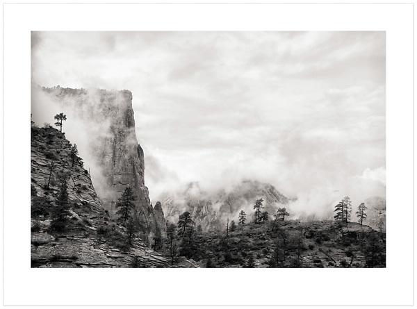 Trees in Mist - Zion National Park, Utah, U.S.A. (Ian Mylam/© Ian Mylam (www.ianmylam.com))